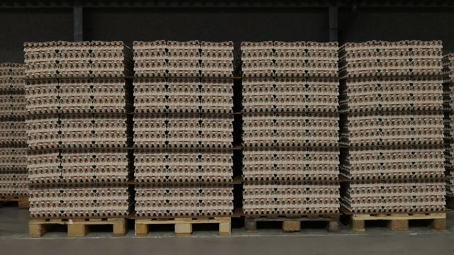 Eggs sit stacked in cardboard packing trays ahead of boxing inside an egg farm in the West Flanders region of Belgium on Thursday Aug 10 2017