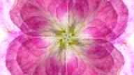 ROSE : eight petal (LOOP)