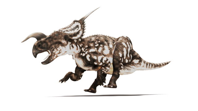 Einiosaurus dinosaur animation. This horned herbivorous dinosaur is known from fossils discovered in Montana, USA. It dates from the Late Cretaceous period, 65 to 100 million years ago. For the RGB and image mask, see image number K002 5514