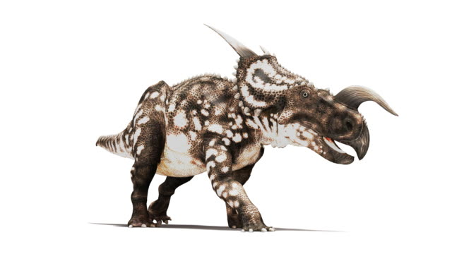 Einiosaurus dinosaur animation. This horned herbivorous dinosaur is known from fossils discovered in Montana, USA. It dates from the Late Cretaceous period, 65 to 100 million years ago. For the RGB and image mask, see image number K002 5504