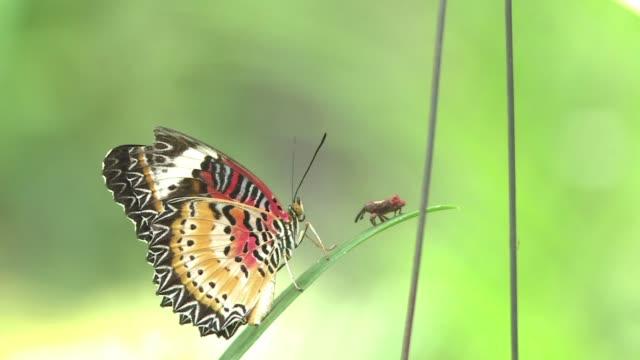 El Centro de Mariposas Banteay Srey de Camboya unico en el sureste asiatico educa sobre el ciclo vital de estas criaturas al tiempo que proporciona...