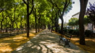 el prado park in sevilla hyperlapse with yellow flowers in the floor