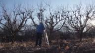 Elderly White Farmer Man Sets Up Ladder in Orchard