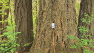 ZI CU Electrical outlet plugged into tree in forest, Battle Ground, Washington, USA
