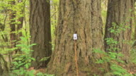 MS Electrical outlet plugged into tree in forest, Battle Ground, Washington, USA