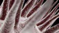 (HD1080) Electron Mikroskopie Handy mit ALPHA