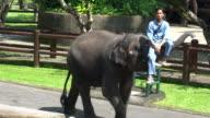 Elephant Caretaker And His Elephants In Bali, Indonesia