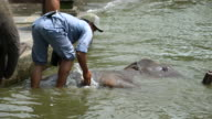 Elephant Caretaker Bathing A Rescued Sumatran Elephant In Bali, Indonesia