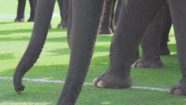Elephant close up : HD Slow motion