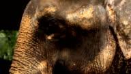 Elephant close-up