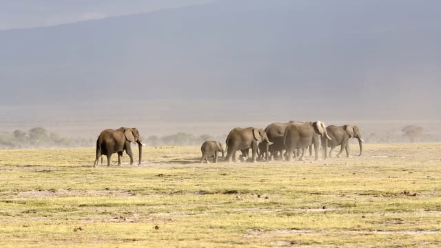 Elephant Family at Amboseli