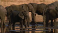 Elephant herd in waterhole, Botswana, South Africa Available in HD.