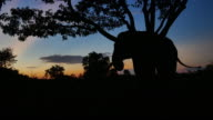 elephant in the forest silhouette