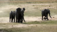 WS TS SLO MO Elephant mother running with calf / Kasane, Botswana