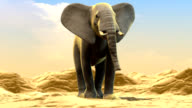 elephant on desert