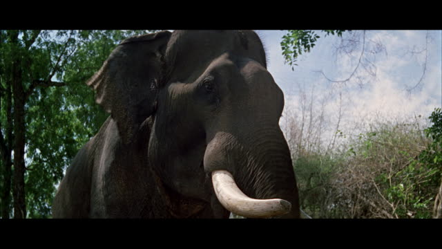 MS POV Elephant raiseing trunk in air