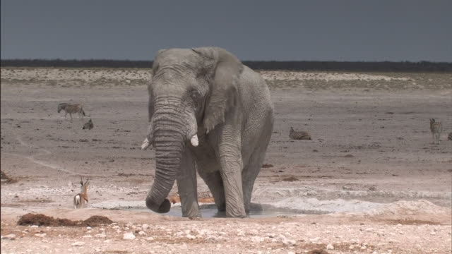 in piedi di elefante in uno specchio d'acqua