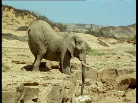 Elephant strains to clamber down from rocky ledge