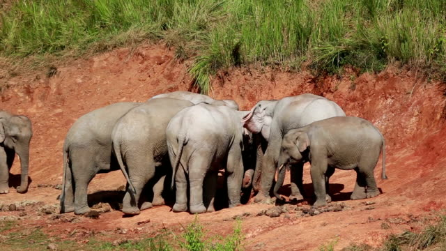 Elephant Thailand.