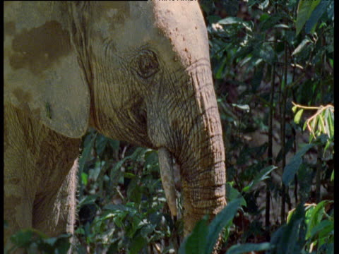 Elephant touches plant with trunk