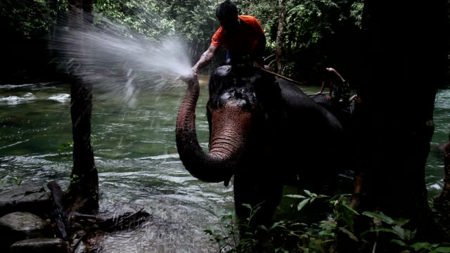 Elephants bathe in a mountain river
