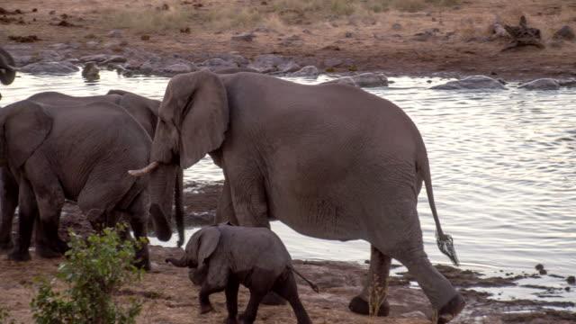 LS PAN Elephants By The Waterhole