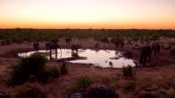 WS DS Elephants By The Waterhole