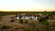 T/L WS Elephants By The Waterhole