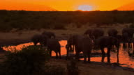 LS Elephants Drinking Water From Waterhole at sunset