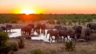 LS DS Elephants Drinking Water From Waterhole