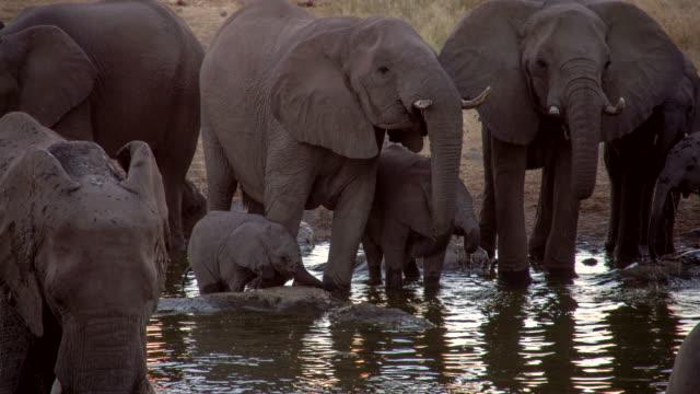 LS Elephants Drinking Water From Waterhole