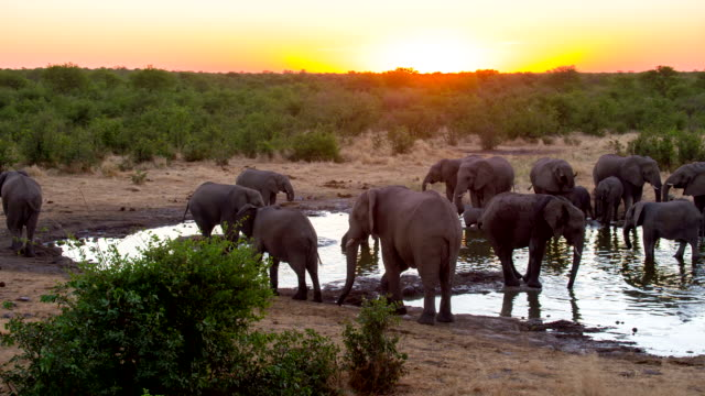 LS Elephants Drinking Water From Waterhole