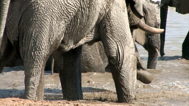 Elefanti avendo un bagno
