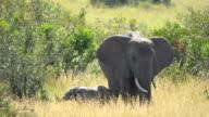 Elephants in an African savannah
