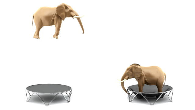Elefanti saltare il trump