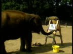 Elephants' paintings CF TAPE NO LONGER AVAILABLE Woburn Safari Park aEN BONGS elephant painting with trunk CF = B0549805 OR B0277335 OR B0021395...