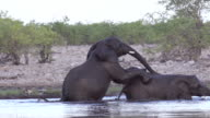 Elephants playing in the water, Slow Motion