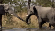 Elephants spar in a watering hole. Available in HD.