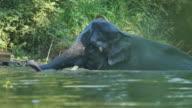 Elefanten Baden Sie