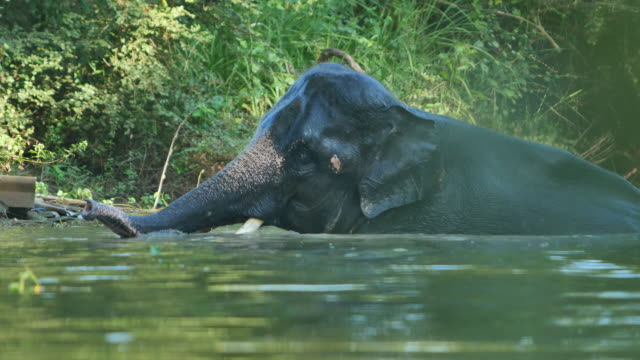 Elefanti fare il bagno