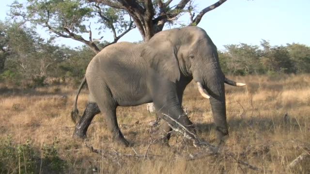 Elephants walking by safari