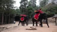 Elephants walking in Angkor, Cambodia