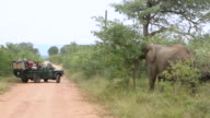 WS Elephants walking on forest with safari vehicle / Hoedspruit, Northern Province, South Africa