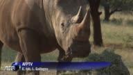 En las afueras de Johannesburgo decenas de jovenes son formados para luchar contra los cazadores furtivos de rinocerontes una amenaza para la...
