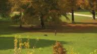 Englischer Garten, autumn,  lawn, trees, sun, blue sky, in background skyline of Munich, panning shot