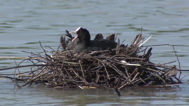 Englischer Garten - Seehaus, lake,  ducks sitting in nest