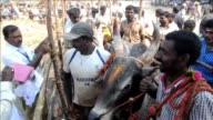 Enthusiasts take part in an annual Jallikattu bull taming festival in the Indian village of Palamedu nearly three weeks after Tamil Nadu state lifted...