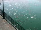 Environment: Swirling Trash Floats Past in Water