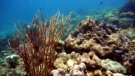 Epic Nature Underwater: Red Sea Whip Coral (Elisella).