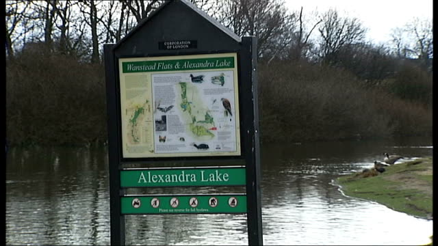 Epping Forest constables taking dead birds away for testing Sign 'Alexandra lake' John Smith interview SOT CUTAWAYs of Canada geese swimming in pond...